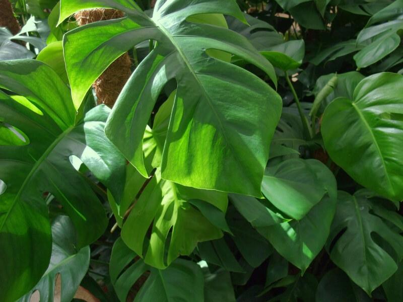 Pflanzen fürs Bad gesucht? Die 12 besten Badpflanzen!