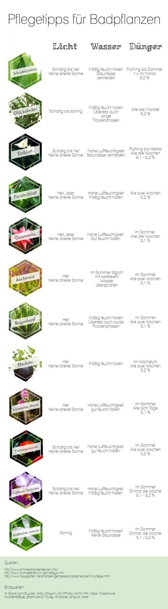 Infografik Pflege von Badpflanzen