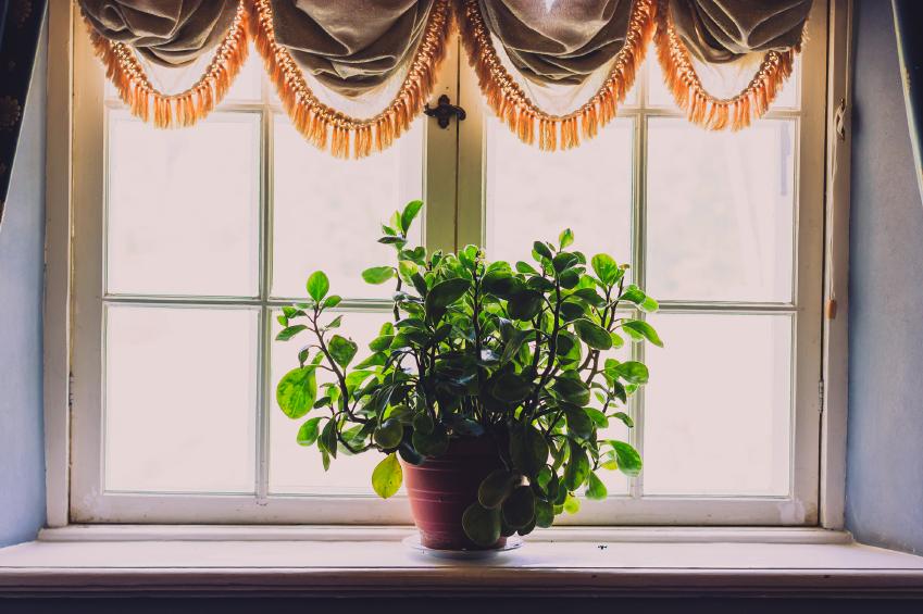 Zimmerpflanze im Gegenlicht auf Fensterbrett