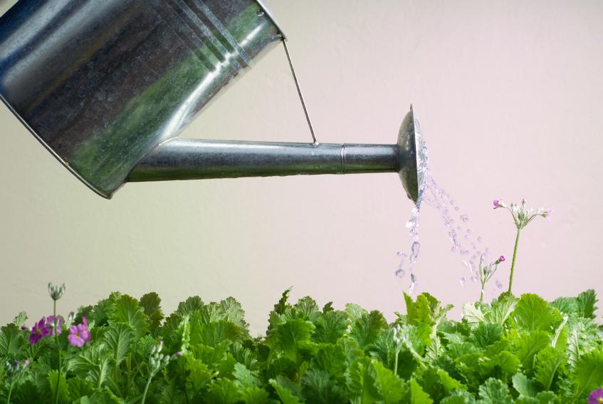 Gießkanne Nahaufnahme gießt grüne Blätter